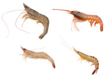 Various kind of raw shrimps Stock Photography