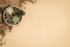 Various kind of succulent plants in a can setting on cardboard with dried leaves Stock Image