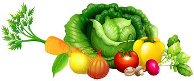 Various kind of vegetables Stock Image