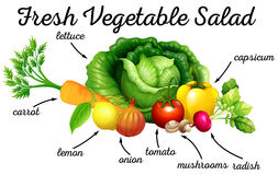 Various kind of vegetables for salad Stock Photography