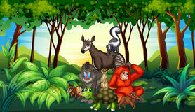 Various kind of wild animals living in the forest Stock Photo
