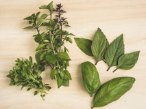 Various kinds of basil. Four types of basil, which using in cuisine Stock Photo