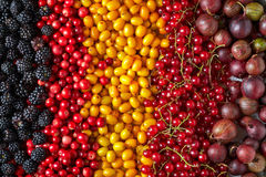 Various kinds of berries Royalty Free Stock Photos