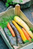 Various kinds of carrots Stock Photography