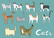 Various kinds of cat Stock Images