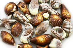 Various kinds of chocolate seashells Stock Image