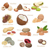 Various kinds of color flat realistic Nuts and seeds icon collection. vector illustration
