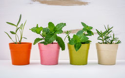 Various kinds of colorful potted garden herbs with white shabby Royalty Free Stock Photography