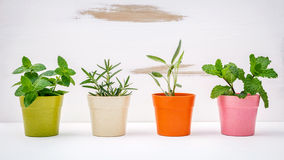 Various kinds of colorful potted garden herbs with white shabby Stock Photography