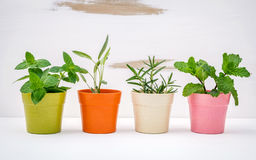 Various kinds of colorful potted garden herbs with white shabby Stock Photo