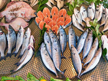 Various kinds of fish Royalty Free Stock Photo