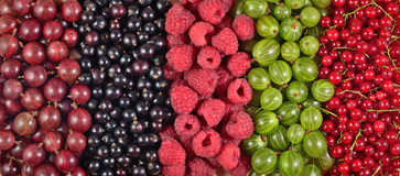 Various kinds of fresh berries as background Stock Photo