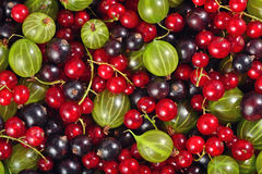 Various kinds of fresh berries as background Royalty Free Stock Photos