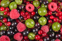 Various kinds of fresh berries as background Royalty Free Stock Photography