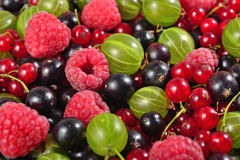 Various kinds of fresh berries close up as background Stock Images