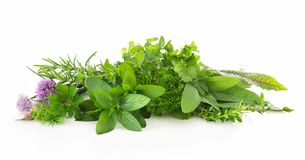 Fresh garden herbs isolated on white background. Various kinds of fresh garden herbs isolated on white background Royalty Free Stock Photo