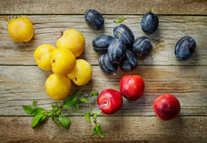 Various kinds of fresh plums Royalty Free Stock Photos