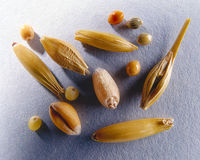 Various kinds of grain Royalty Free Stock Photos