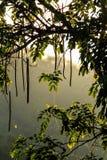 Various kinds of plants. The planr is named kanlaphruek in Thailad stock photo