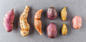 Various kinds of potatoes flat lay. Different kinds of potatoes flat lay on stone surface Royalty Free Stock Photos