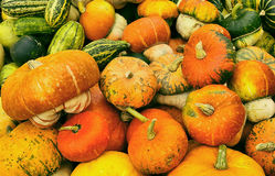 Various kinds of  pumkins harvest Royalty Free Stock Photo