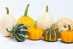 Various kinds of pumpkins. Stock Photo