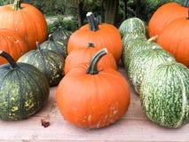 Various kinds of pumpkins Royalty Free Stock Photo