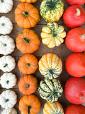 Various kinds of pumpkins Royalty Free Stock Image