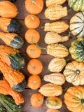 Various kinds of pumpkins Royalty Free Stock Photos