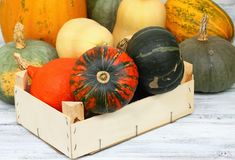 Various kinds of pumpkins Royalty Free Stock Images