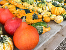 Various kinds of pumpkins Stock Photos