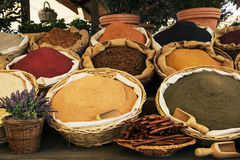 Various kinds of spices Royalty Free Stock Images