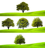 Collection of green trees Stock Photography