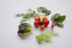 Various leafy greens and cherry tomatoes Stock Images