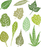 Various leaves Royalty Free Stock Images
