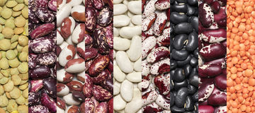 Various legume set. Set of various legume grains close-up texture: white, black, purple and red speckled beans, red and green lentils Stock Photography