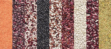 Various legume set. Set of various legume grains texture: white, black, purple and red speckled beans, red and green lentils Stock Photos