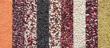 Various legume set Stock Photos