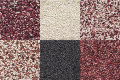Various legume set. Set of various legume grains texture: white, black, purple and red speckled beans, red and green lentils Royalty Free Stock Image