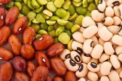 Various legumes Stock Photos