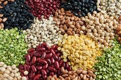 Various Legumes stock image