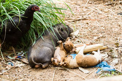 Various lifestyle. Of animals in the farm Royalty Free Stock Photos