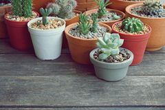 Various little succulent pot plants collection on vintage wood table with free space background. Cactus, haworthia, dorestenia stock photo
