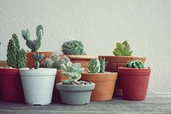 Various little succulent pot plants collection on vintage wood table with free space background. Echeveria, cactus, haworthia, kalanchoe Stock Photo