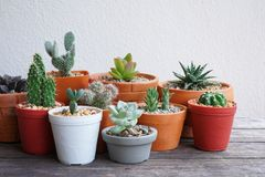 Various little succulent pot plants collection on vintage wood table with free space background. Echeveria, haworthia, cactus, dorestenia stock images