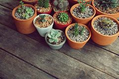 Various little succulent pot plants collection on vintage wood table with free space background. Haworthia, dorestenia, cactus, kalanchoe royalty free stock image