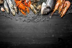 Various marine shrimp, shellfish and lobsters at the fishing net. Fresh seafood. Various marine shrimp, shellfish and lobsters at the fishing net. On a black Stock Photos