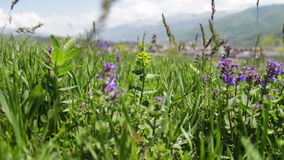 Various meadow flowers and young green juicy grass on meadow in summer pricked in the wind. Various meadow flowers and young green juicy grass on a meadow stock video footage