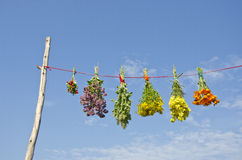 Various medical herb flowers bunches on string and sky Stock Image