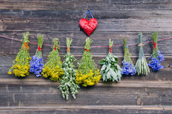 Various medical herbs on old wooden farm wall Royalty Free Stock Photography